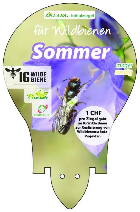 Wildbienen Sommer mager