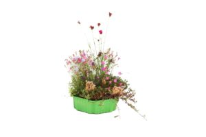 Wildblumen Dachgarten
