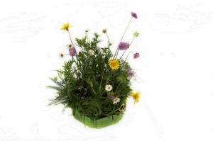Blumenwiese fett frisch